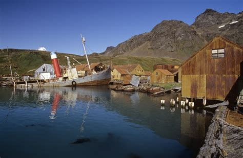 Whale Hunting The Harsh Legacy of Grytviken, Antarctica