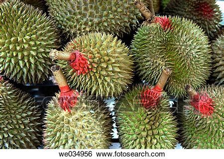 Stock Images of Durian fruits