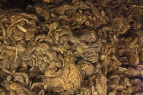 Human hair ready to be made into clothing - Picture of
