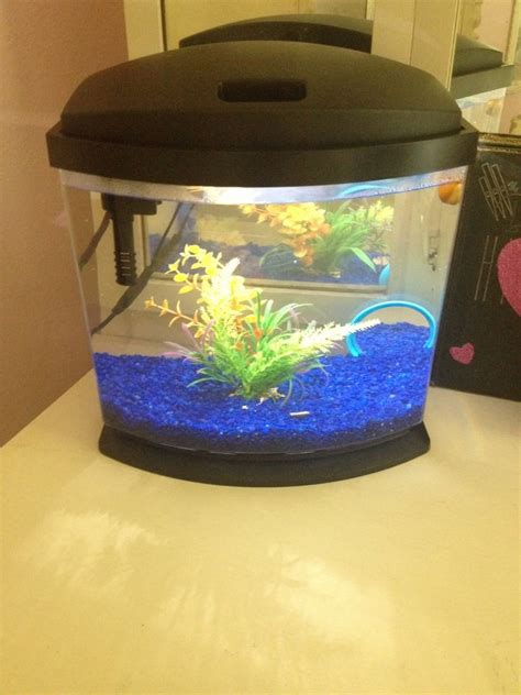 What Kind Of Tropical Fish Can Live In A 2