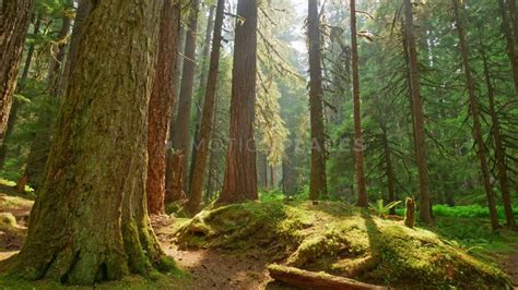 Mossy Forest Timelapse Free Stock Footage | Motion Places