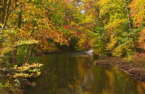The Most Beautiful Places To See Fall Foliage In New Jersey
