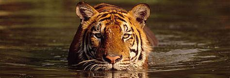 Frequently Asked Questions - Tiger   WWF India