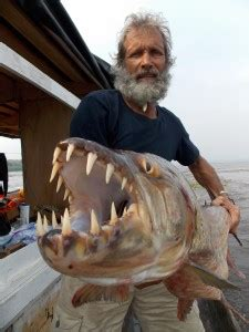 Animal Planet Takes Earth Touch's 'Africa's Piranha' For
